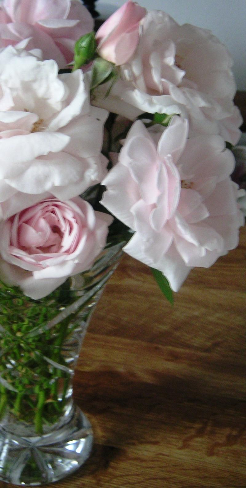 Rose1_3