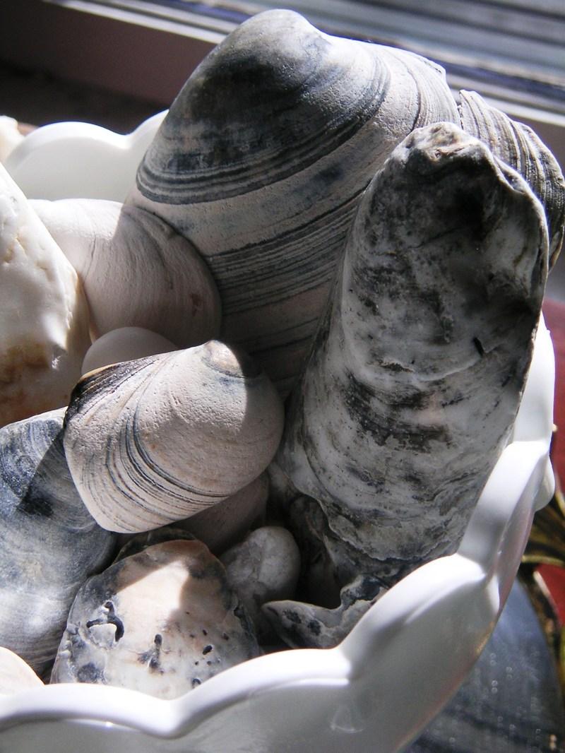 Bowl_shells_2