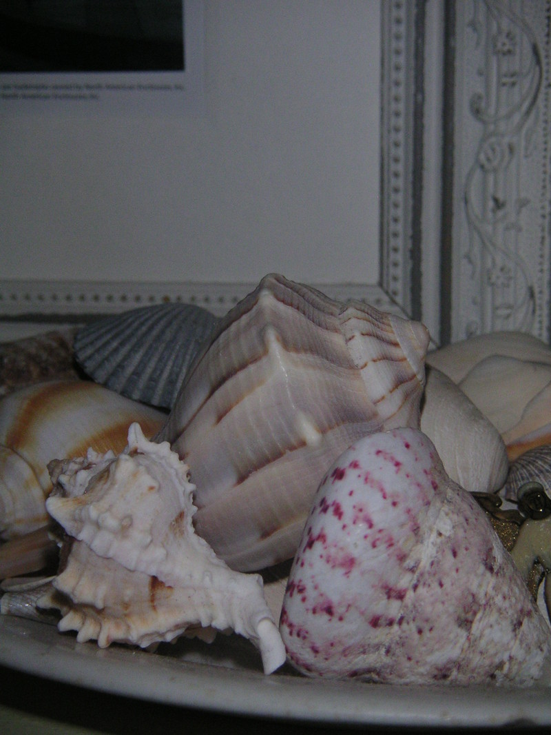 Plate_of_shells_2