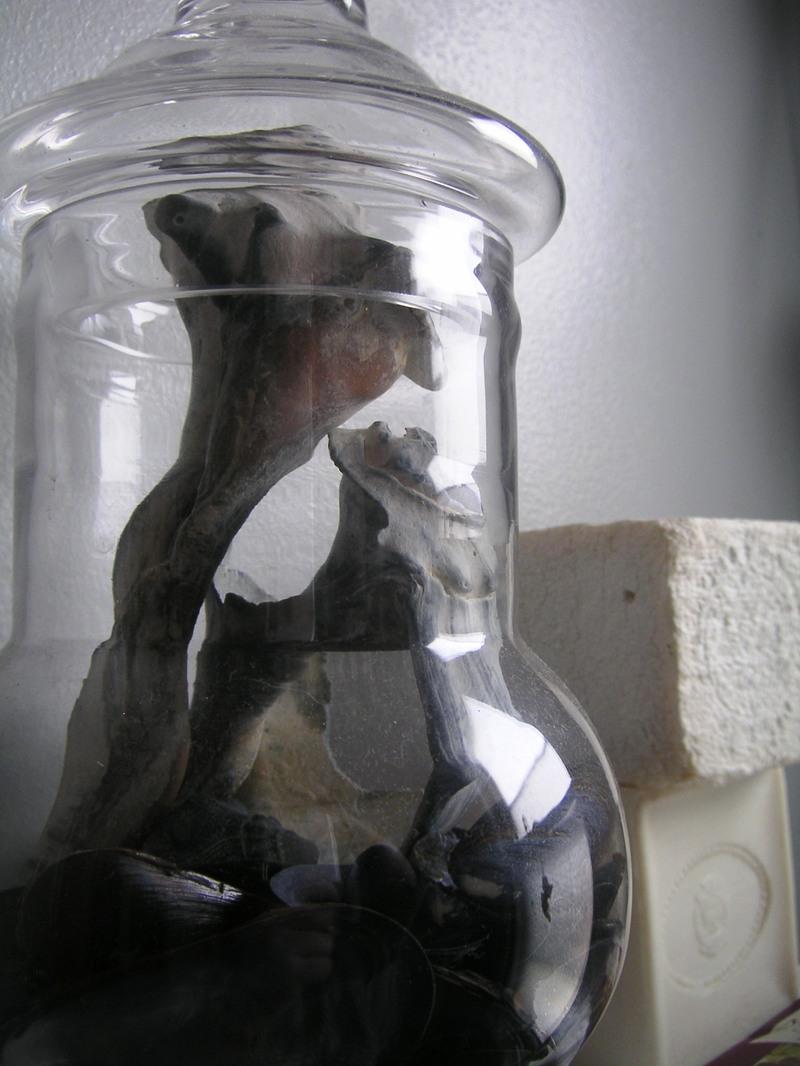 Jar_of_shells