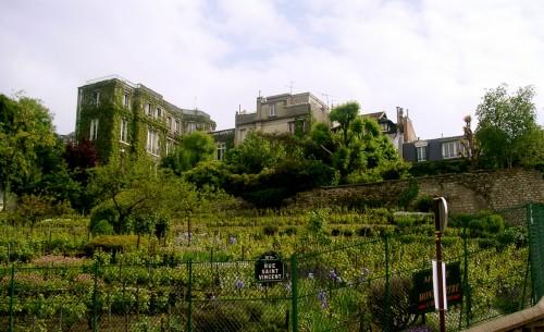 Vineyard Clos Montmartre, Paris