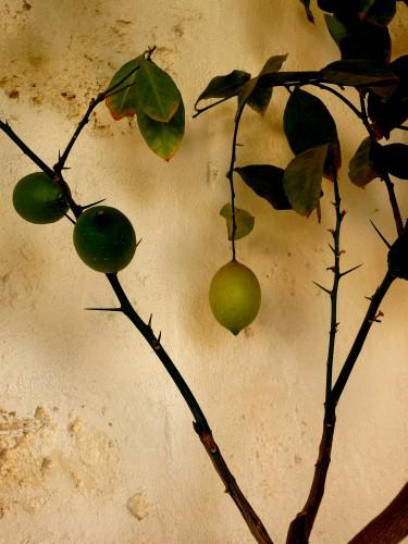 limes at borgo egnazia