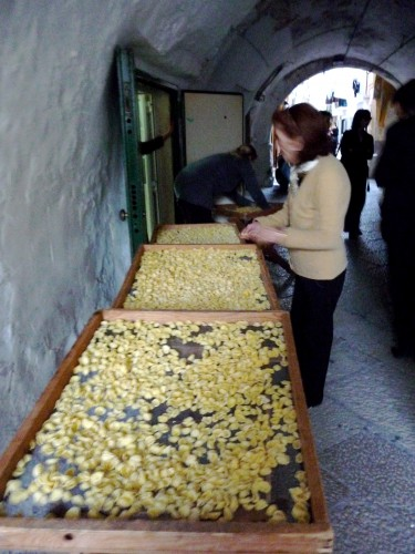 Shopping for handmade orecchiette in old bari
