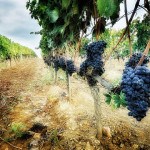 wine tasting tips tuscany