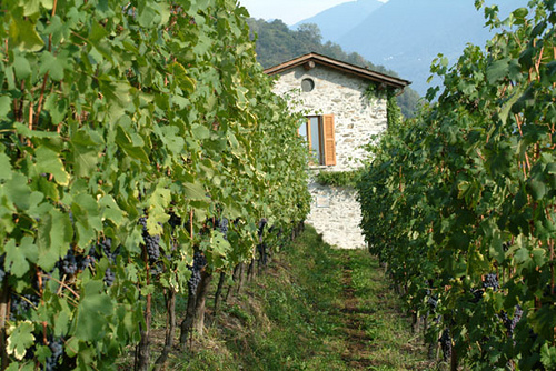 nino negri wine estate