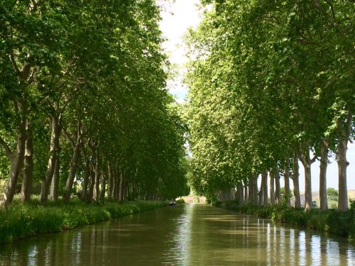 scenery along canal du midi on Athos barge