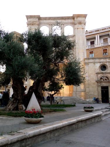 olive tree piazza sant'oronzo lecce